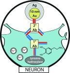 Frontpage dopamine iron